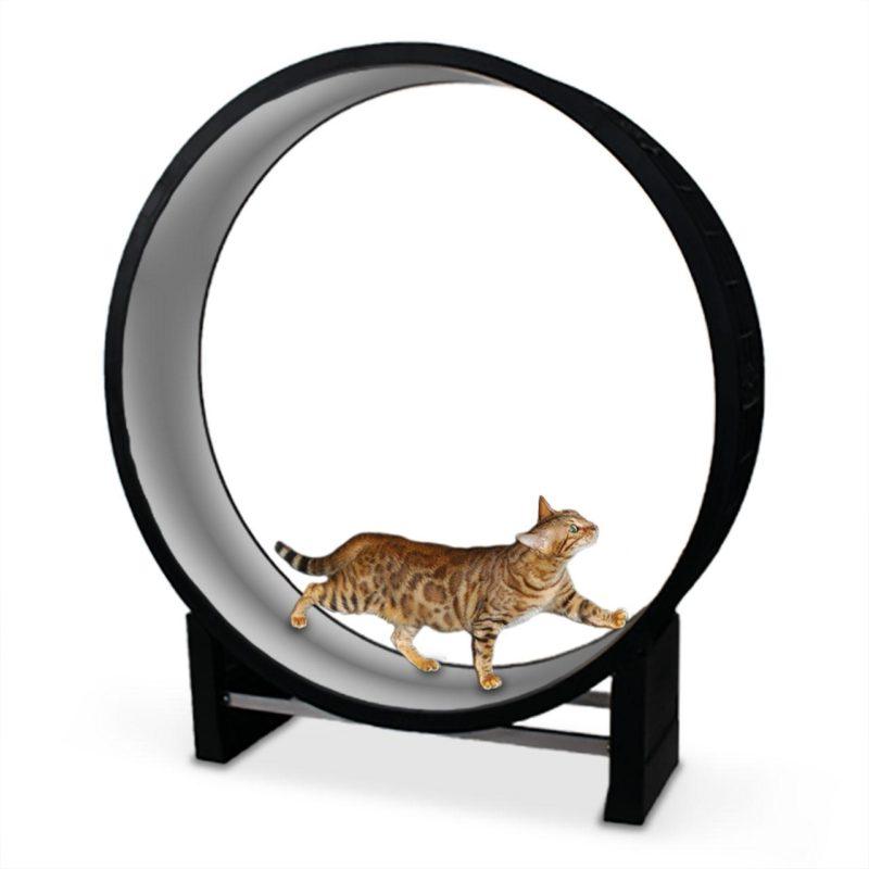 колесо упражнений для кота