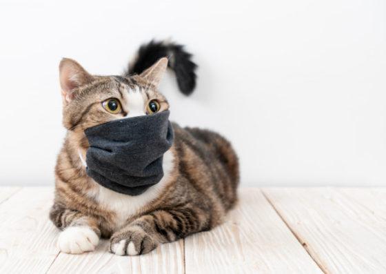 владельцы кошек имеют более высокий иммунитет к COVID-19