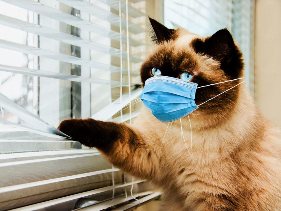 Противовирусная терапия для кошек