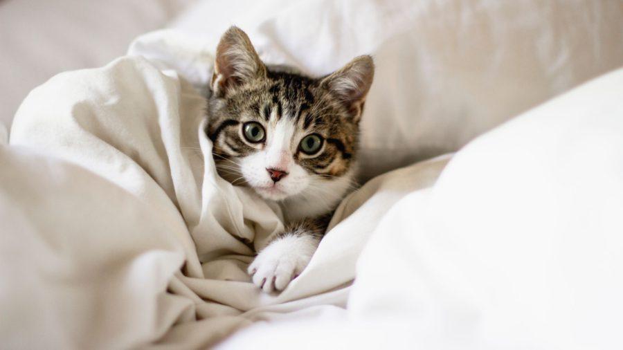 Расстройства пищеварения у кошек