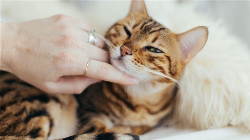 Может ли вирус передаваться через шерсть домашних животных?