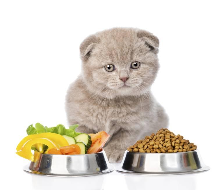 Сухой корм для кошки какой лучше
