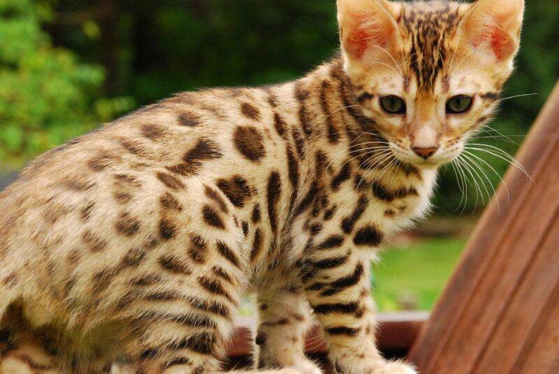 Бактерии, паразиты и вирусы кошек