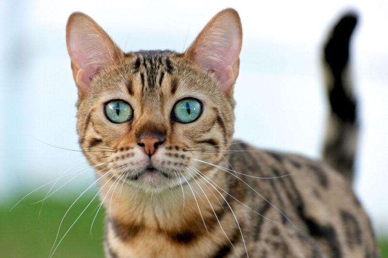 Какие проблемы с глазами у кошки встречаются чаще всего и что делать, чтобы их предотвратить?