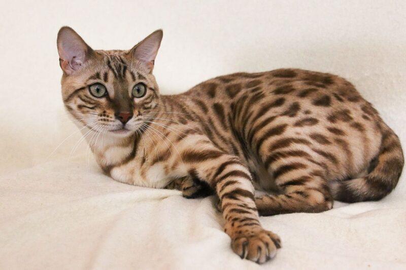 Отравление кошек: общий обзор