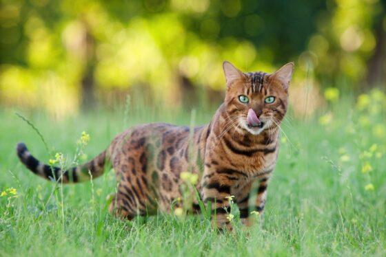 Какие продукты можно есть кошкам