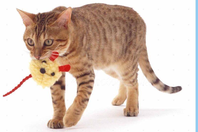 Как играть с кошкой