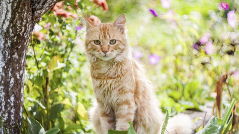 Чем помочь кошке с мочекаменной болезнью