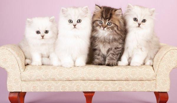 Ласковые и игривые кошки