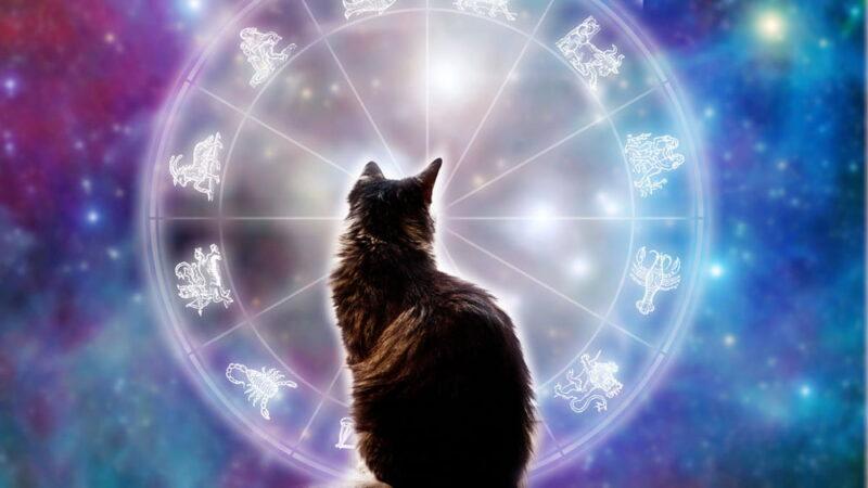 Эта порода кошек подходит Вашему знаку зодиака.