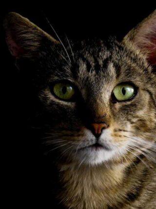 Пропала кошка: как действовать, чтобы попытаться найти её как можно быстрее?