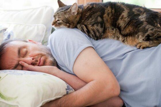 Моя кошка будит меня по ночам: советы, которые нужно реализовать!