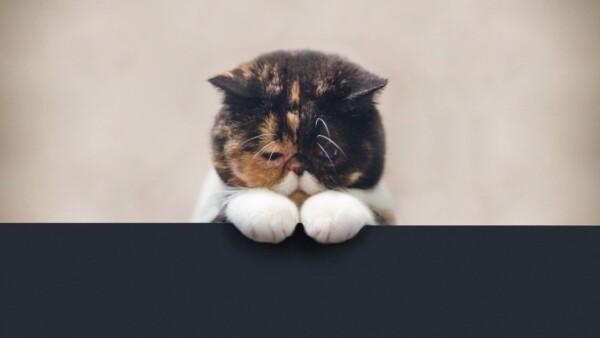 Что дать кошке для пищеварения