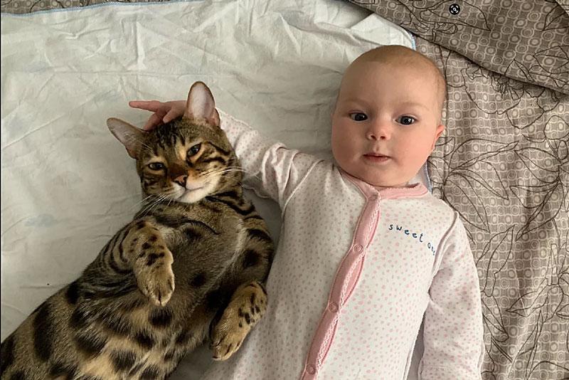 Появление новорожденного ребенка в доме с бенгальской кошкой