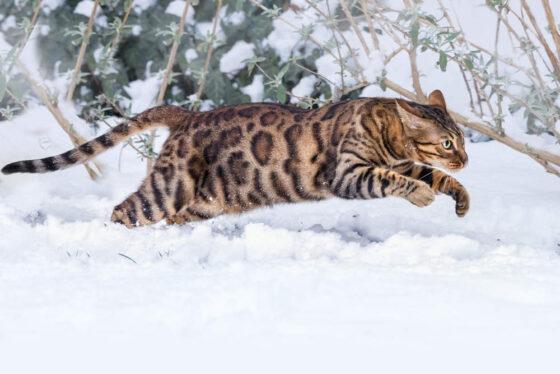 4 совета, как помочь кошке зимой