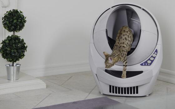 Решение проблемы с туалетом для Бенгальской кошки