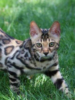 Советы по кормлению кошек, чтобы справиться с COVID-19