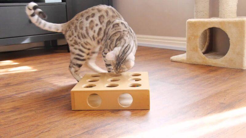 Бенгальская кошка. Любимые игрушки 2020 года