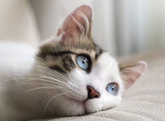 Что делать если у кошки сухой нос