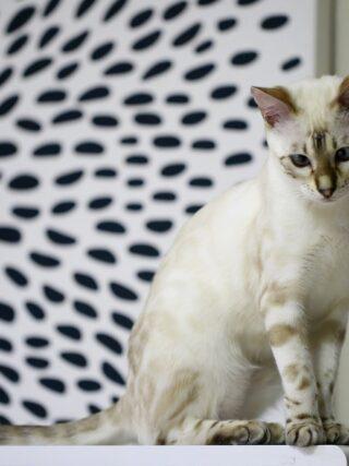 Нужен ли моей кошке профессиональный грумминг уход?