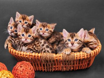 Продажа котят. Как купить котенка