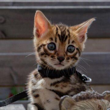 Как продать котенка в ответственные руки