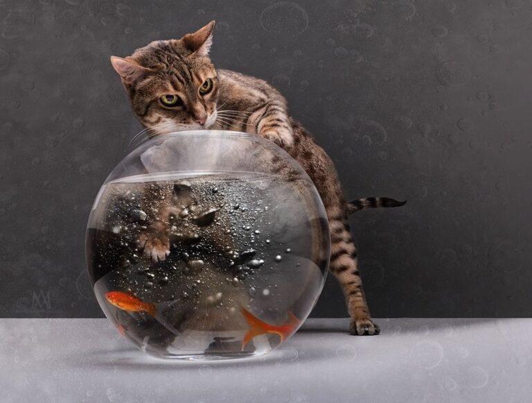 Как сэкономить на корме для кошек