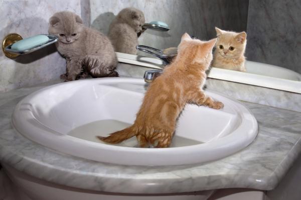 Следует ли купать кошку?