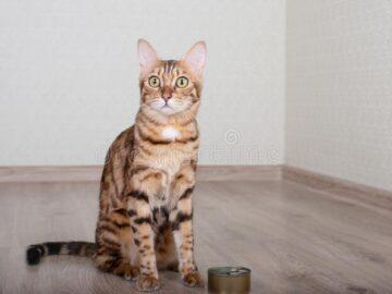 Диета для бенгальской кошки