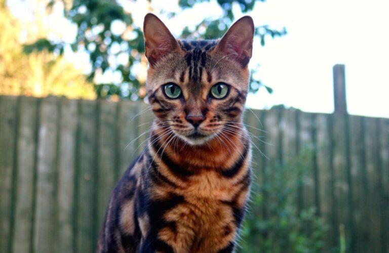 Первая помощь отравленной кошке
