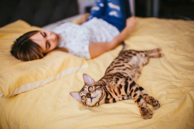 Бенгальский кот — хороший ли питомец для детей?